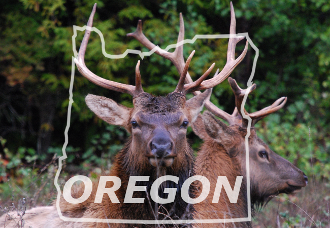two bull elk within border of oregon state
